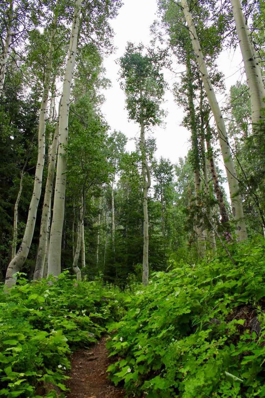 Picture 27 of John Muir Trail (Duck Pass Trailhead to Vermillion Valley Resort)